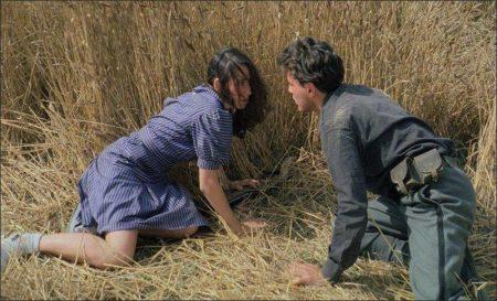 La Notte di San Lorenzo (1982)